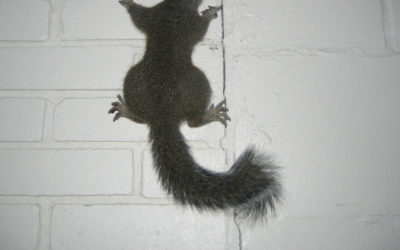 How to keep squirrels away