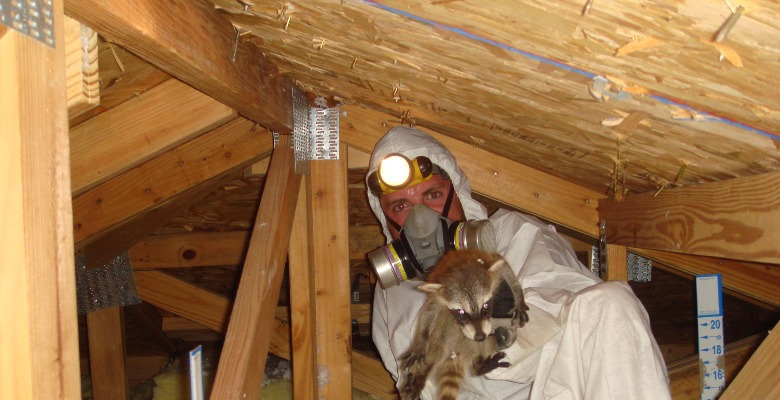 Scratching sounds in the attic or walls