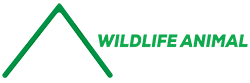 Wildlife Animal Pest