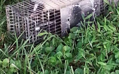 How to keep wild animals away